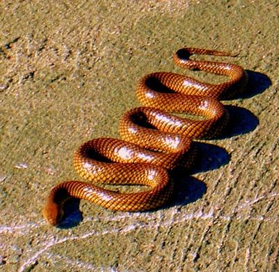 snake in sun3