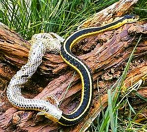 snake skin5