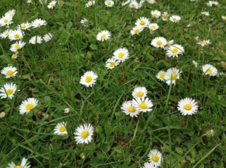 daisy chain flowers